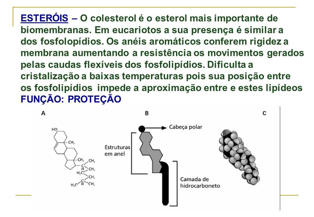 ESTERÓIS – O colesterol é o esterol mais importante de