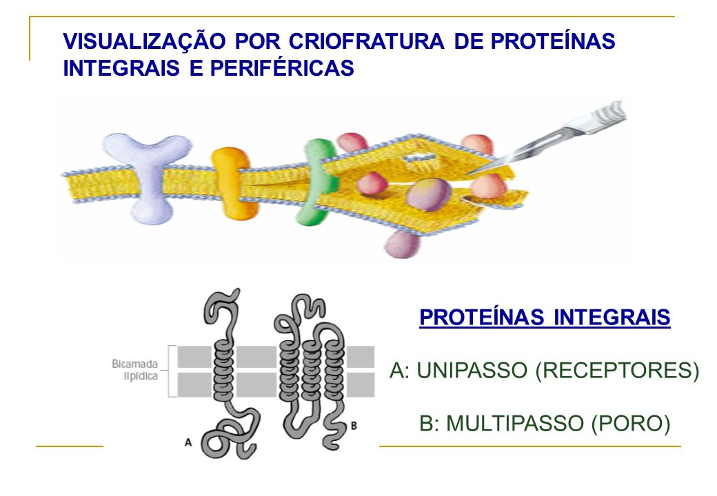 A: UNIPASSO (RECEPTORES)