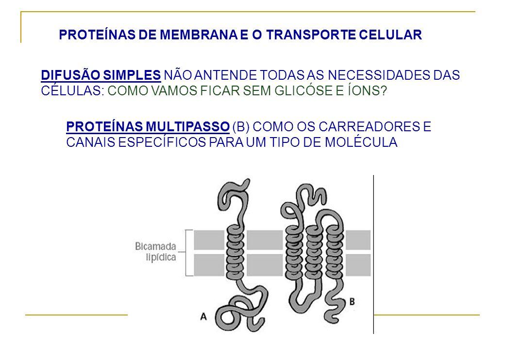 PROTEÍNAS DE MEMBRANA E O TRANSPORTE CELULAR