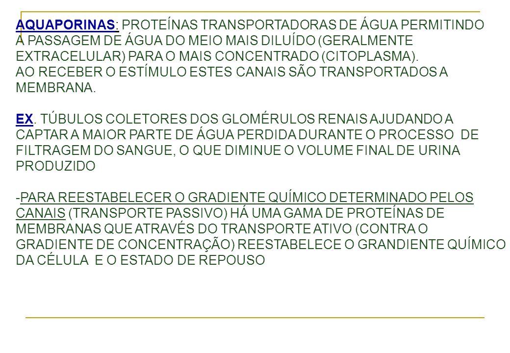 AQUAPORINAS: PROTEÍNAS TRANSPORTADORAS DE ÁGUA PERMITINDO