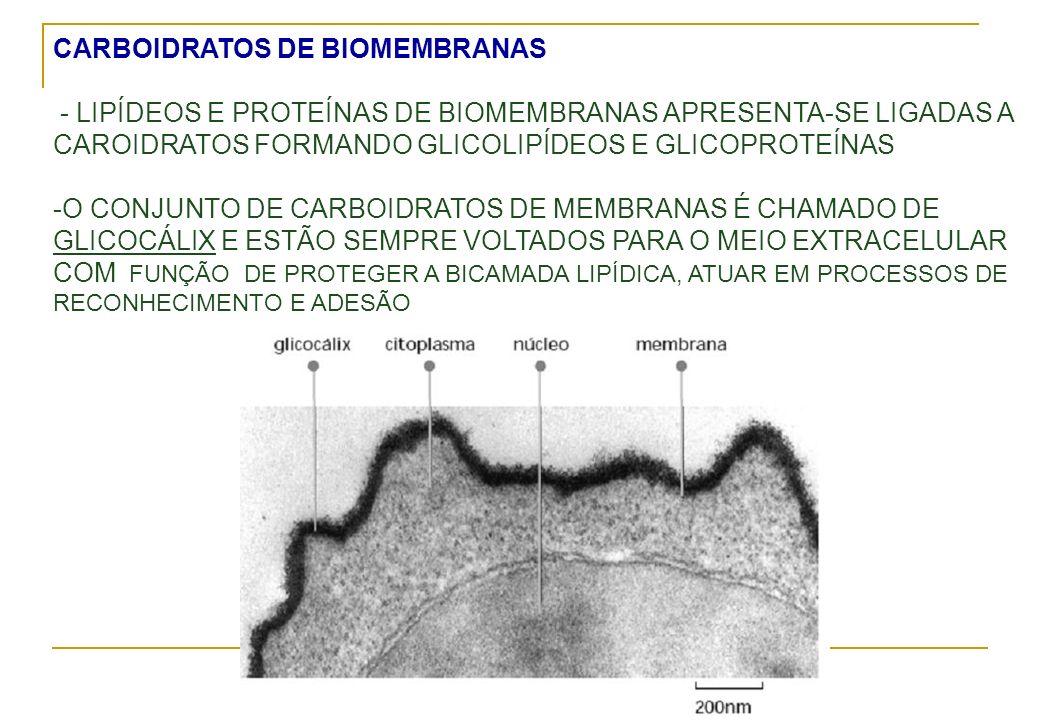 CARBOIDRATOS DE BIOMEMBRANAS