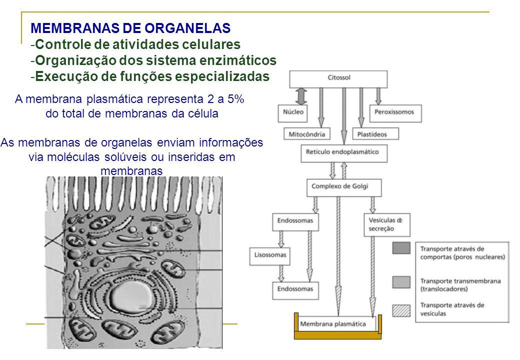 MEMBRANAS DE ORGANELAS Controle de atividades celulares
