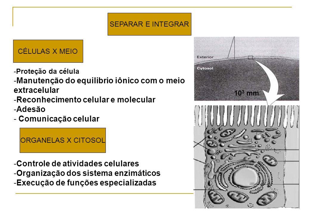 Manutenção do equilibrio iônico com o meio extracelular