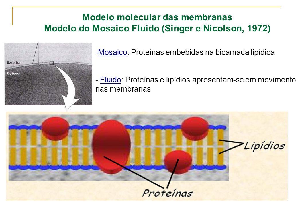 Modelo molecular das membranas