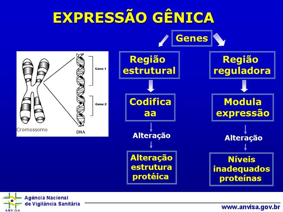 EXPRESSÃO GÊNICA Genes Região estrutural Região reguladora Codifica aa