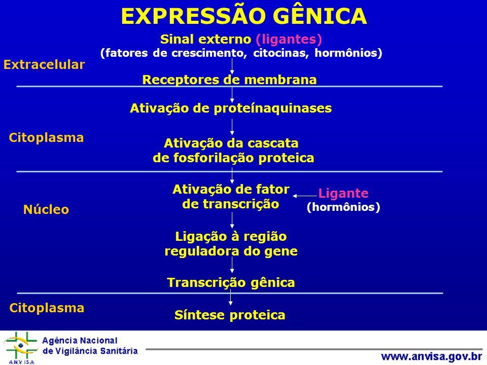 EXPRESSÃO GÊNICA Sinal externo (ligantes) Extracelular