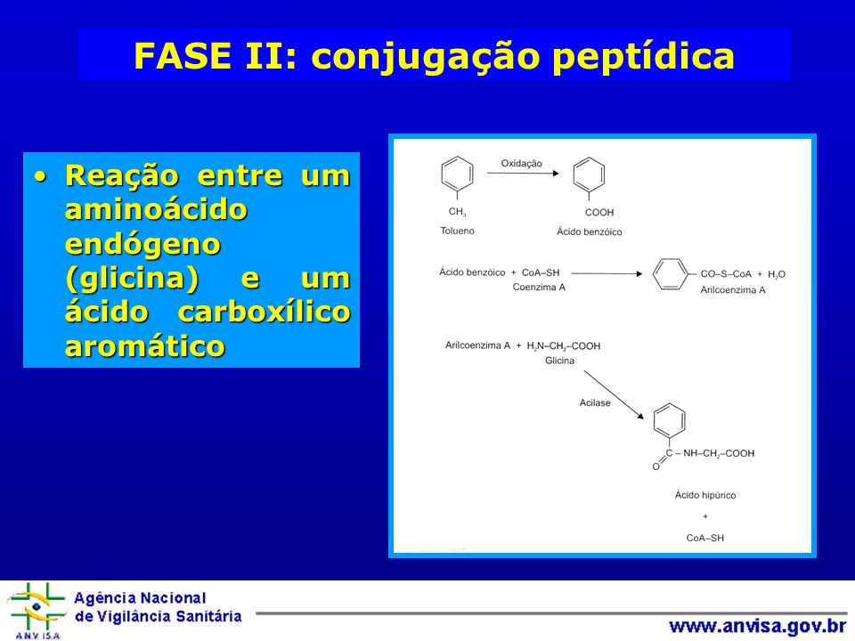 FASE II: conjugação peptídica