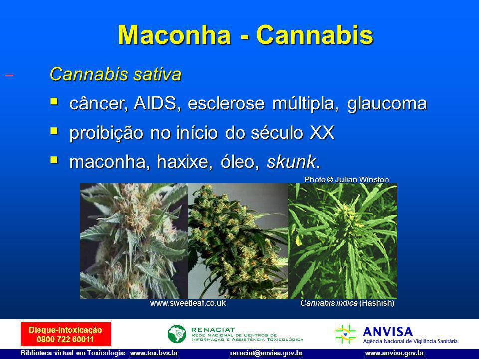 Cannabis indica (Hashish)