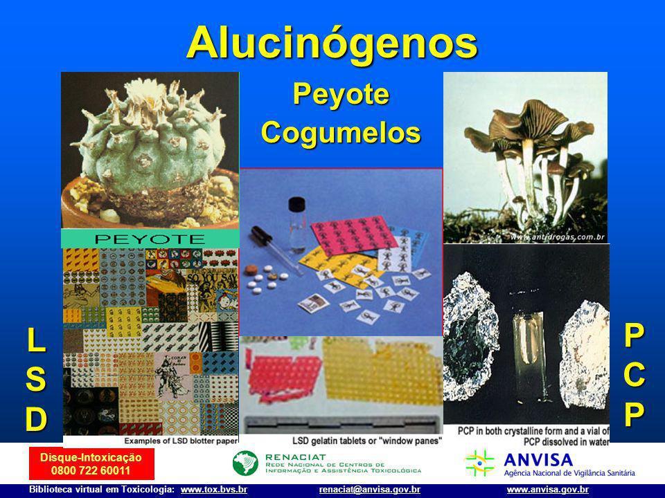 Alucinógenos Peyote Cogumelos PCP LSD