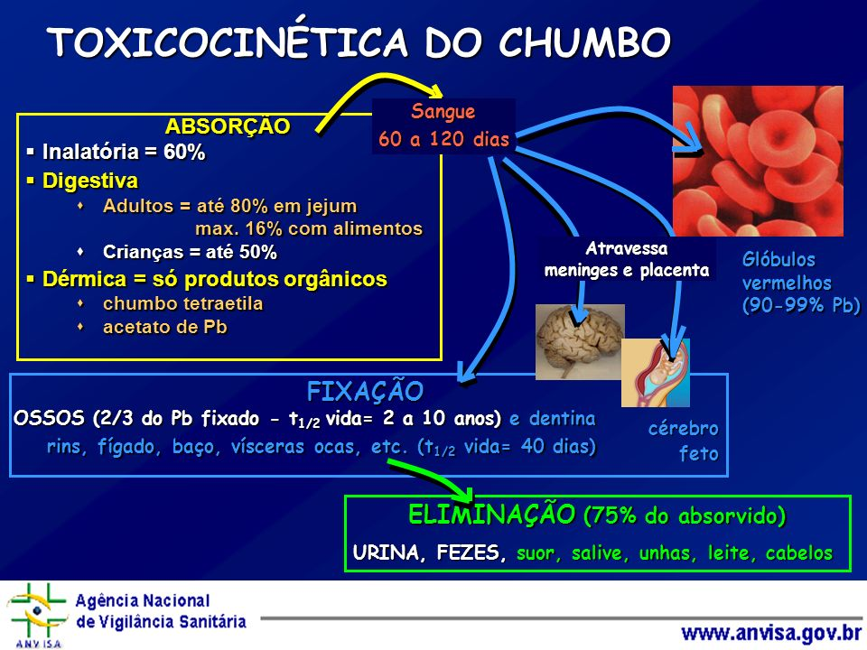 TOXICOCINÉTICA DO CHUMBO