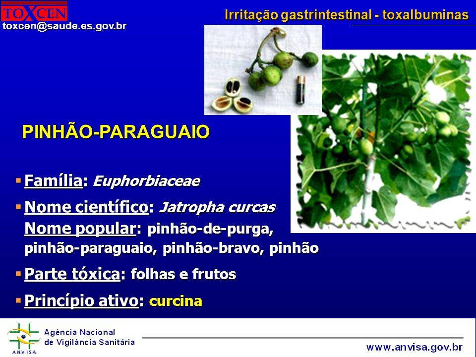 PINHÃO-PARAGUAIO Família: Euphorbiaceae