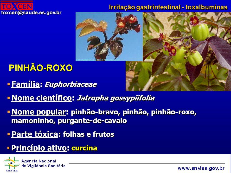PINHÃO-ROXO Família: Euphorbiaceae