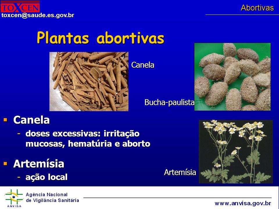Plantas abortivas Canela Artemísia