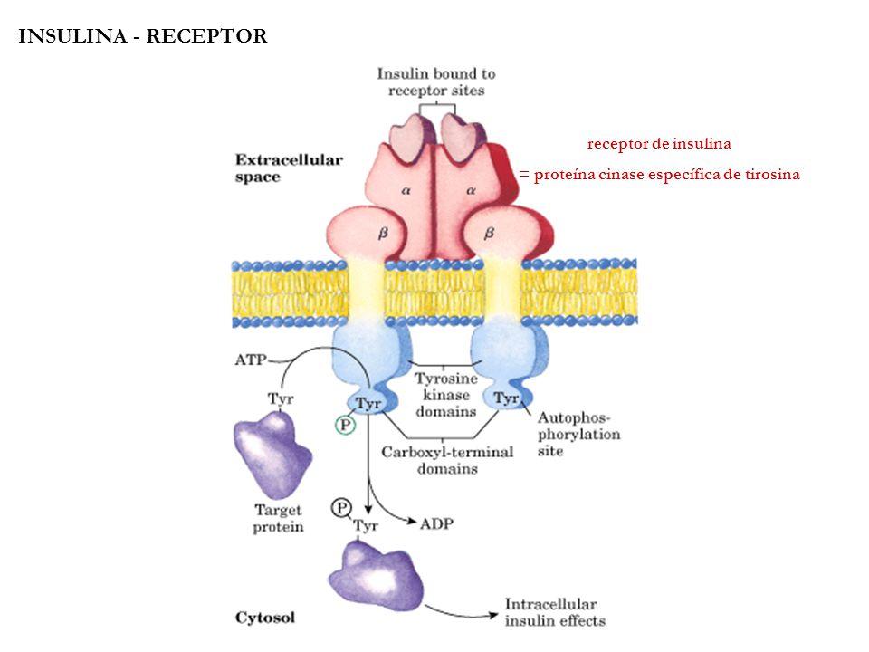 = proteína cinase específica de tirosina