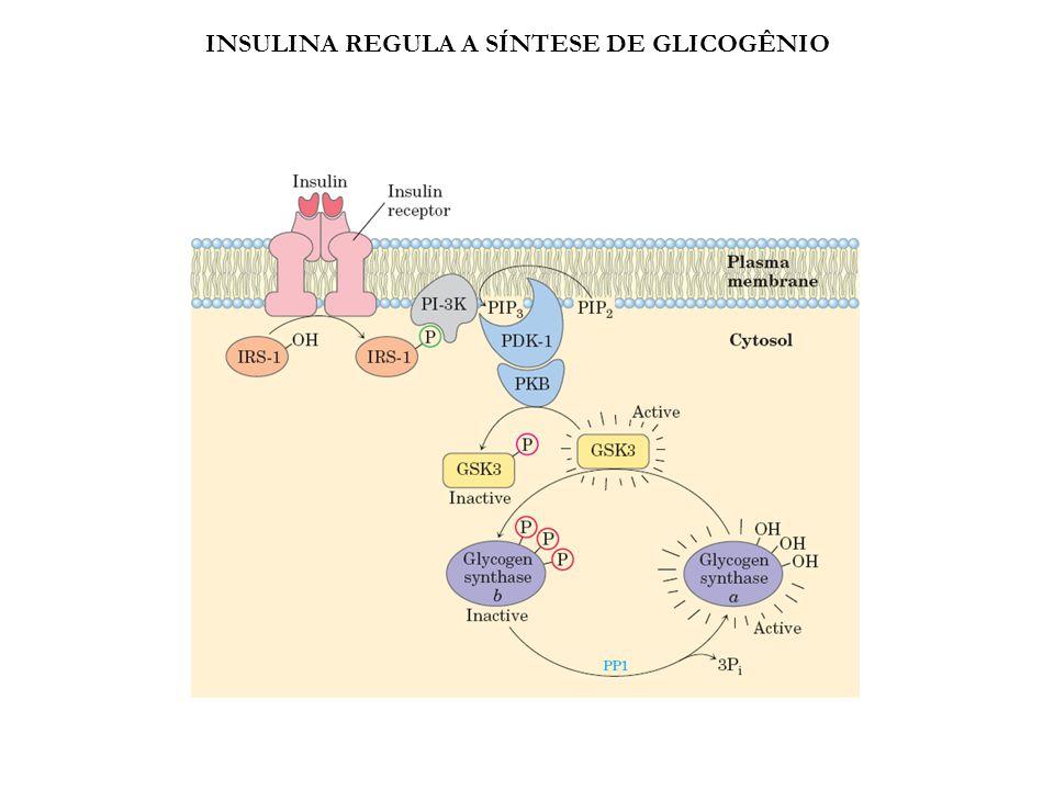 INSULINA REGULA A SÍNTESE DE GLICOGÊNIO