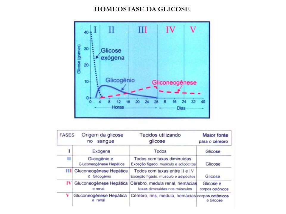 HOMEOSTASE DA GLICOSE