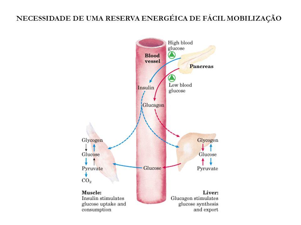 NECESSIDADE DE UMA RESERVA ENERGÉICA DE FÁCIL MOBILIZAÇÃO