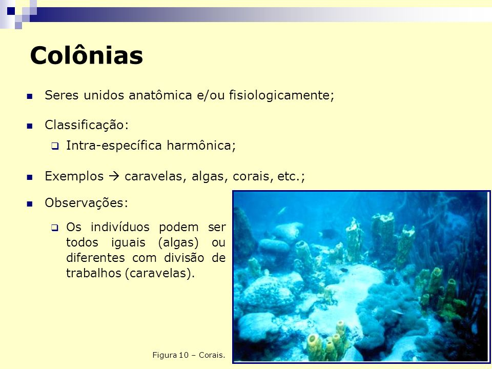 Colônias Seres unidos anatômica e/ou fisiologicamente; Classificação:
