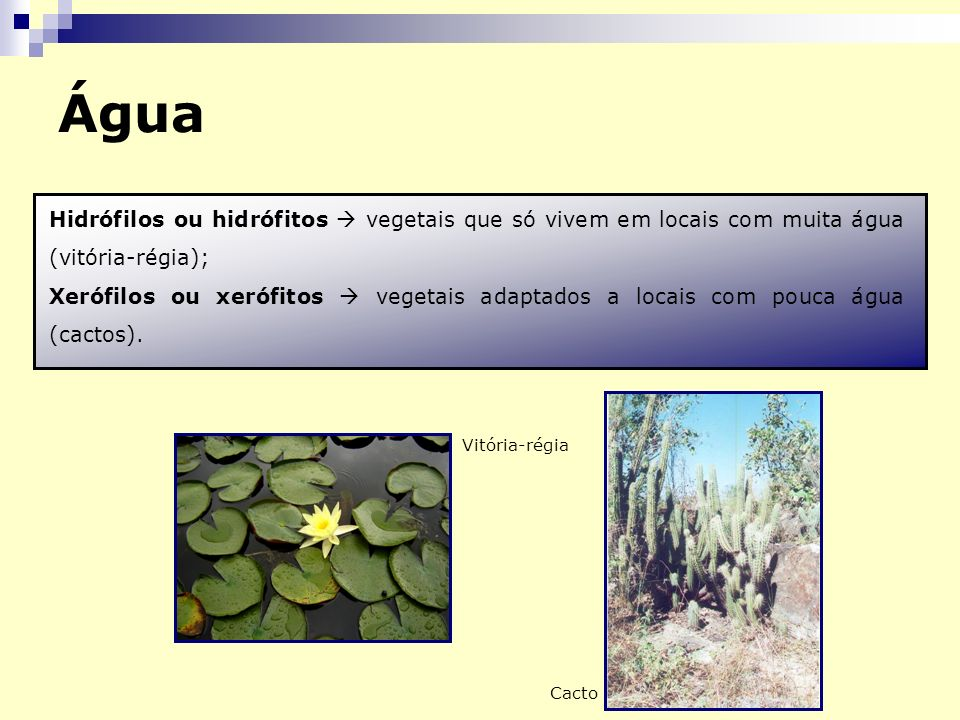 Água Hidrófilos ou hidrófitos  vegetais que só vivem em locais com muita água (vitória-régia);