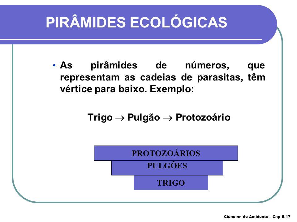 Trigo  Pulgão  Protozoário
