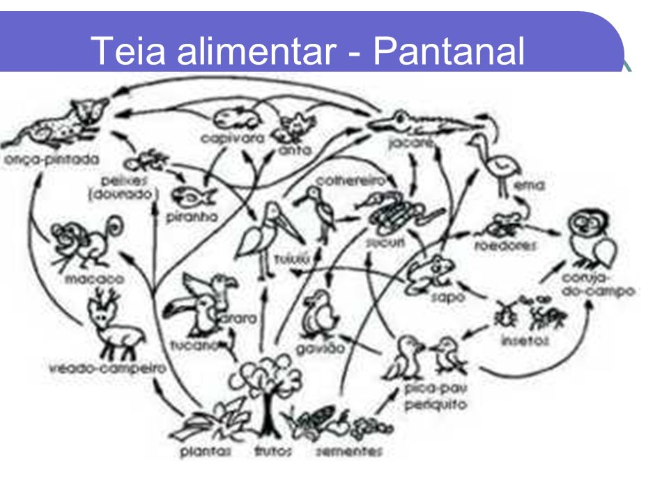 Teia alimentar - Pantanal