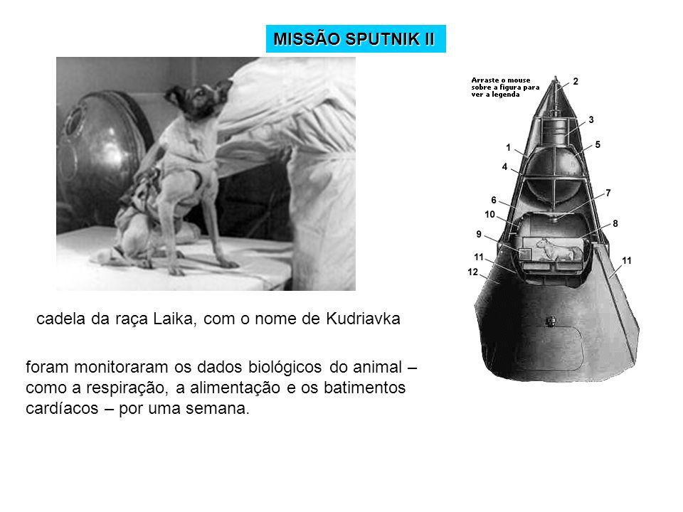 MISSÃO SPUTNIK IIcadela da raça Laika, com o nome de Kudriavka.