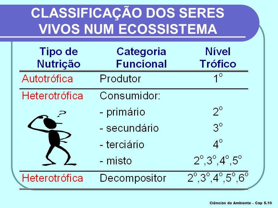 CLASSIFICAÇÃO DOS SERES VIVOS NUM ECOSSISTEMA