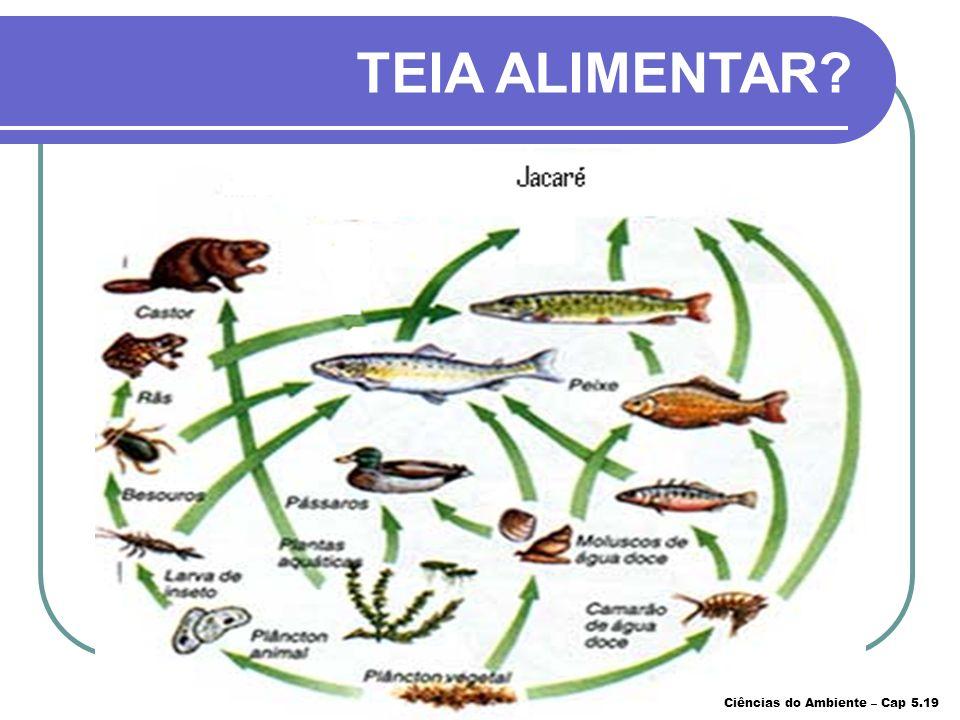 TEIA ALIMENTAR Ciências do Ambiente – Cap 5.19