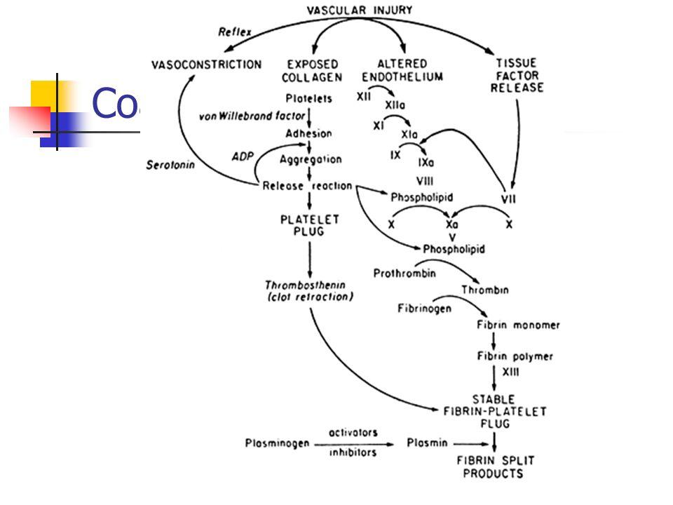 Coagulação - vias