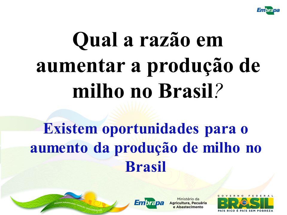 Existem oportunidades para o aumento da produção de milho no Brasil
