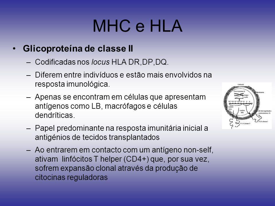 MHC e HLA Glicoproteína de classe II