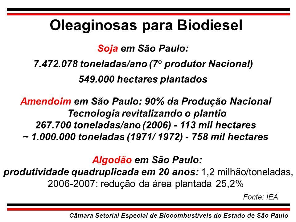 Oleaginosas para Biodiesel