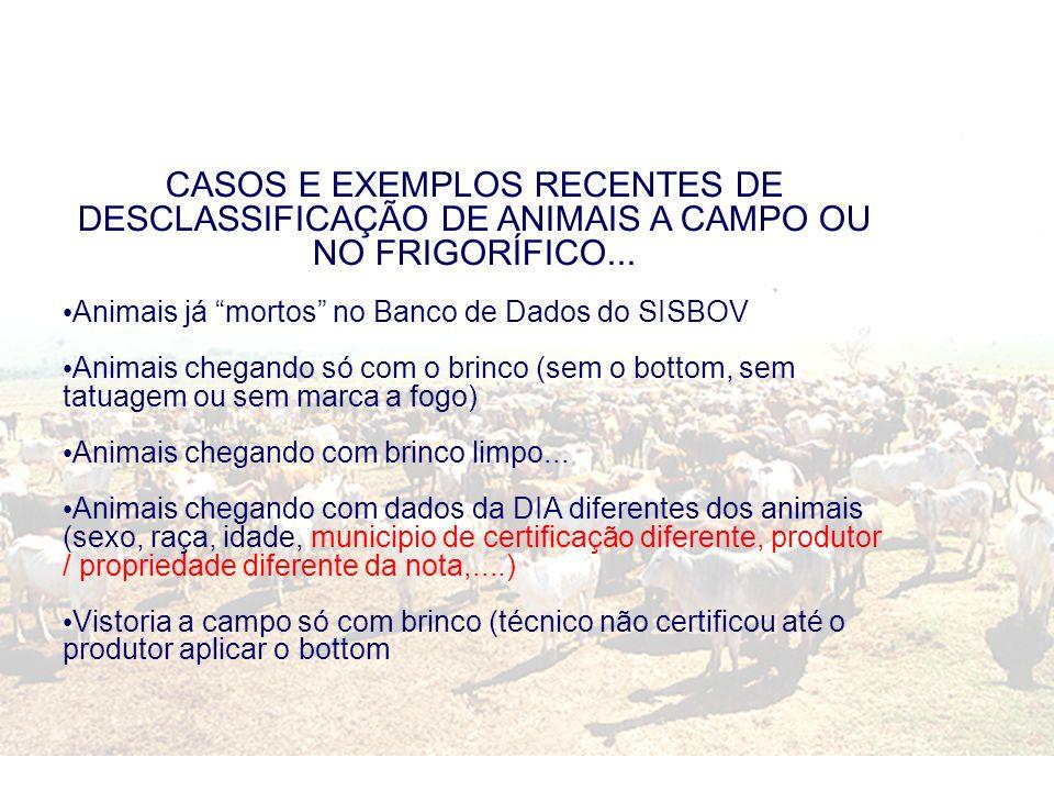 CASOS E EXEMPLOS RECENTES DE DESCLASSIFICAÇÃO DE ANIMAIS A CAMPO OU NO FRIGORÍFICO...