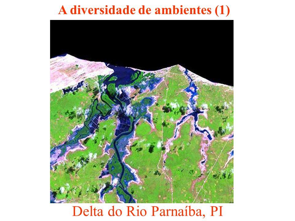 A diversidade de ambientes (1)