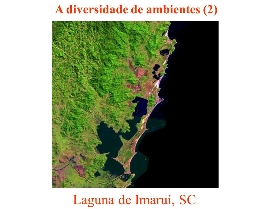 A diversidade de ambientes (2)
