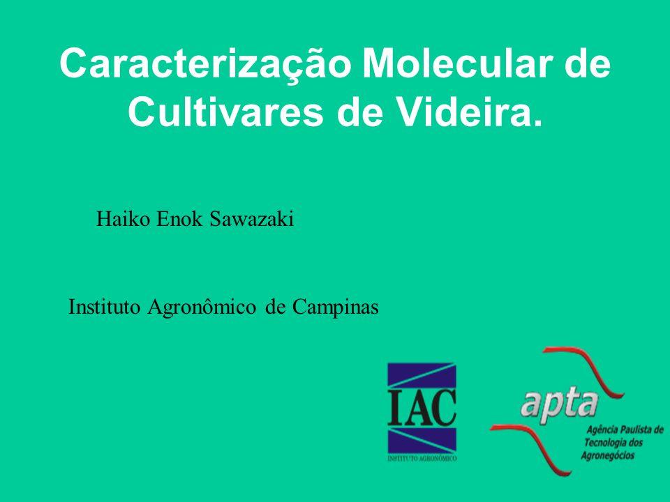 Caracterização Molecular de Cultivares de Videira.