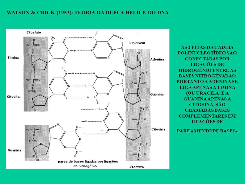 WATSON & CRICK (1953): TEORIA DA DUPLA HÉLICE DO DNA