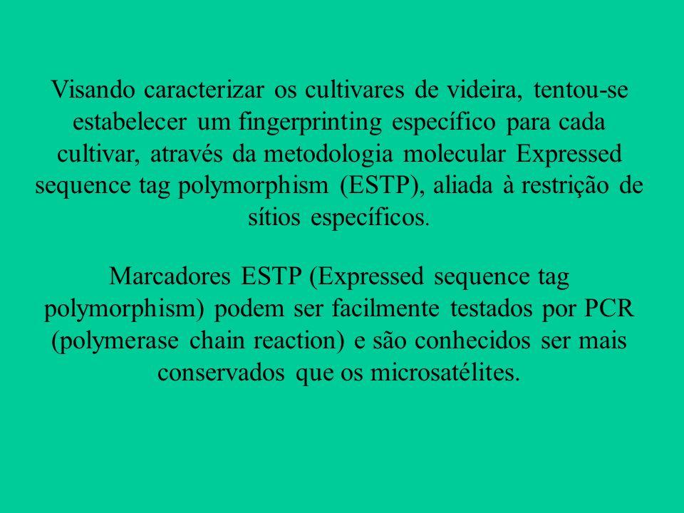 Visando caracterizar os cultivares de videira, tentou-se estabelecer um fingerprinting específico para cada cultivar, através da metodologia molecular Expressed sequence tag polymorphism (ESTP), aliada à restrição de sítios específicos.