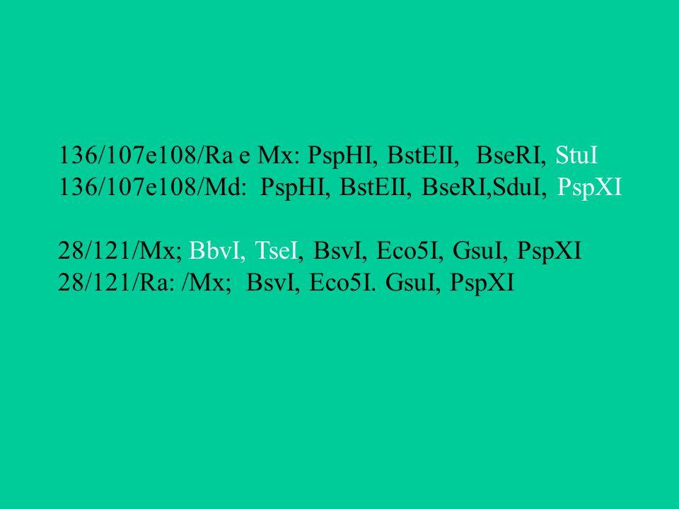 136/107e108/Ra e Mx: PspHI, BstEII, BseRI, StuI