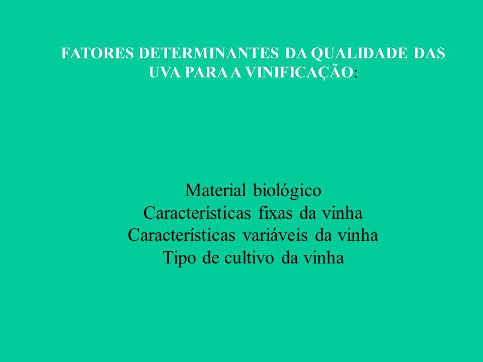 Características fixas da vinha Características variáveis da vinha