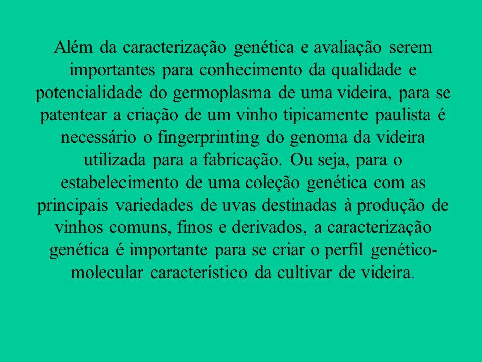 Além da caracterização genética e avaliação serem importantes para conhecimento da qualidade e potencialidade do germoplasma de uma videira, para se patentear a criação de um vinho tipicamente paulista é necessário o fingerprinting do genoma da videira utilizada para a fabricação.