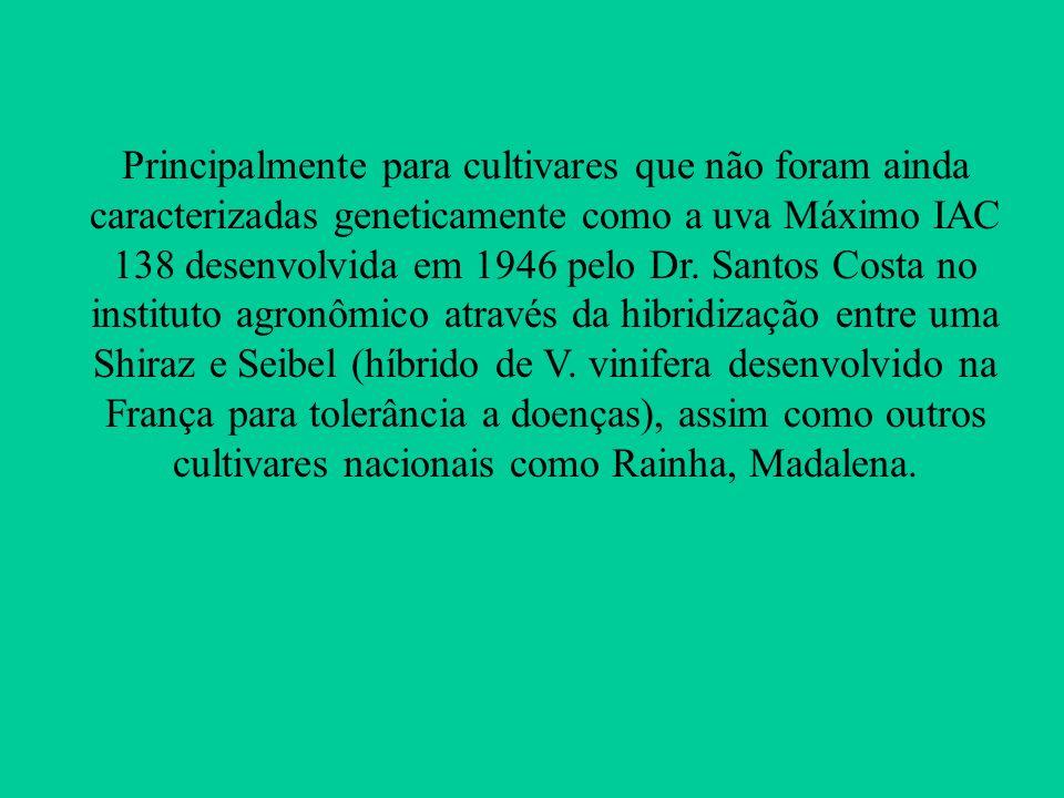 Principalmente para cultivares que não foram ainda caracterizadas geneticamente como a uva Máximo IAC 138 desenvolvida em 1946 pelo Dr.