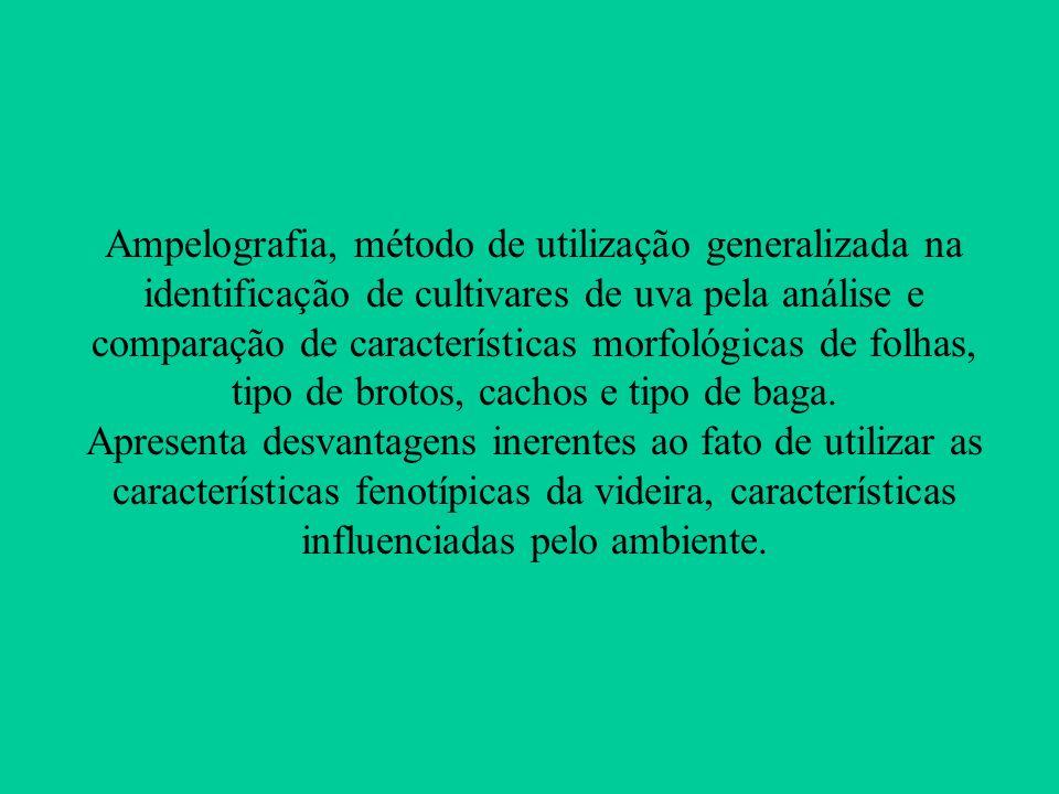 Ampelografia, método de utilização generalizada na identificação de cultivares de uva pela análise e comparação de características morfológicas de folhas, tipo de brotos, cachos e tipo de baga.