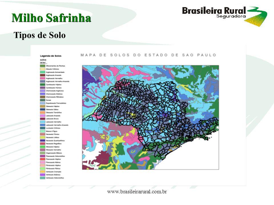 Milho Safrinha Tipos de Solo www.brasileirarural.com.br
