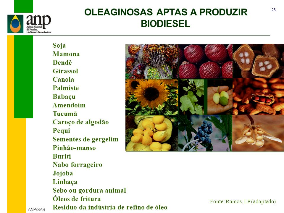 OLEAGINOSAS APTAS A PRODUZIR BIODIESEL