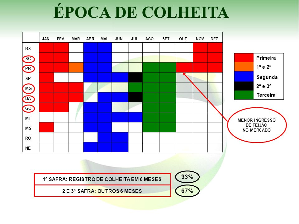 1ª SAFRA: REGISTRO DE COLHEITA EM 6 MESES