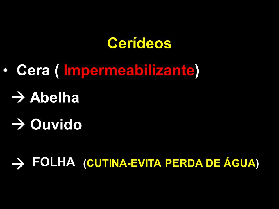  Cerídeos Cera ( Impermeabilizante)  Abelha  Ouvido FOLHA