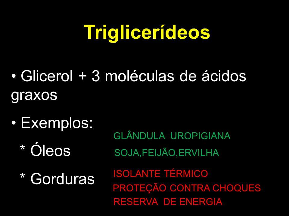 Triglicerídeos Glicerol + 3 moléculas de ácidos graxos Exemplos: