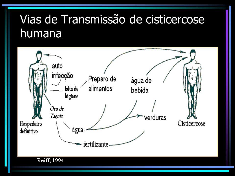 Vias de Transmissão de cisticercose humana