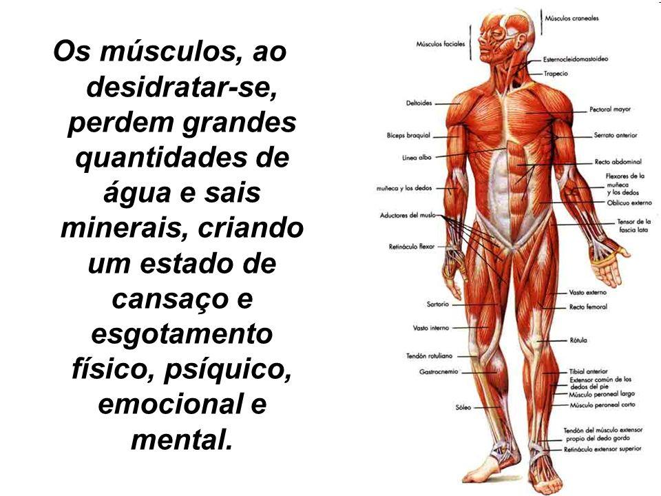 Os músculos, ao desidratar-se, perdem grandes quantidades de água e sais minerais, criando um estado de cansaço e esgotamento físico, psíquico, emocional e mental.